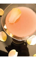 The Brazilian Rose is a refreshing blast of a tropical spring flavor in a well balanced cocktail. A peach colored drink recipe made from Leblon cachaca, triple sec and guava juice, and served in a chilled cocktail glass.